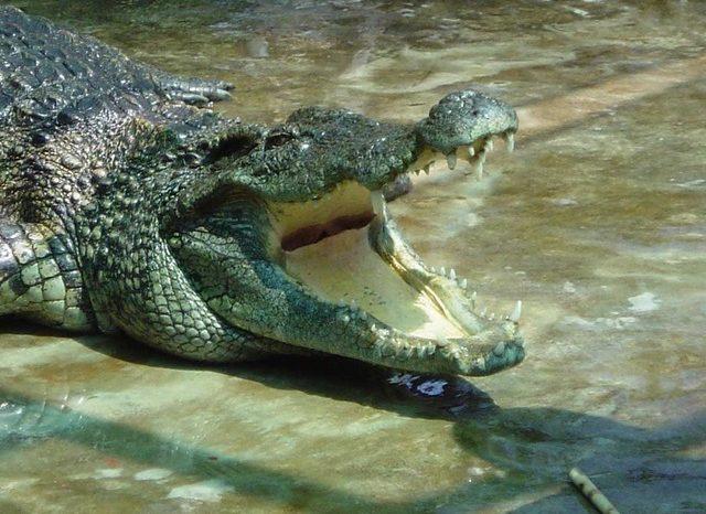 """Экскурсия на крокодиловую ферму """"Крокодилвиль"""" для школьников"""