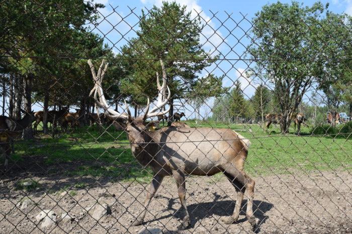 Висим: музей Мамина-Сибиряка, оленеводческая ферма для школьников