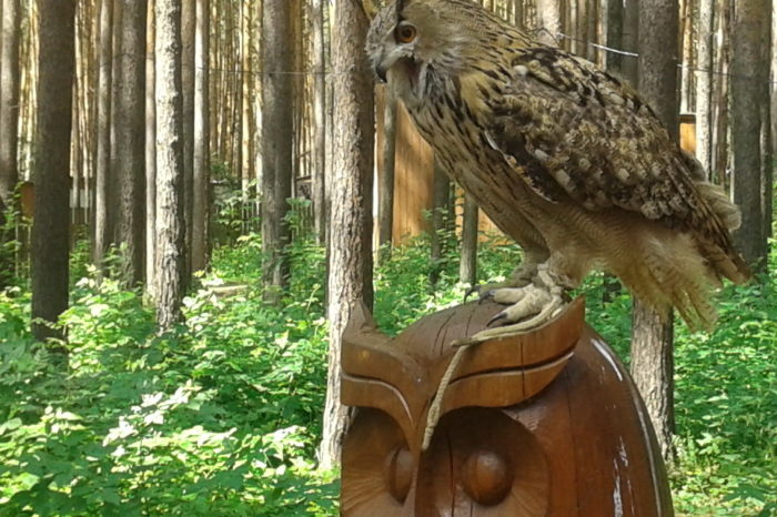 Холзан: центр реабилитации хищных птиц для школьников